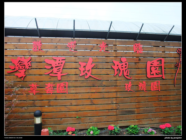 灣潭玫瑰園-2